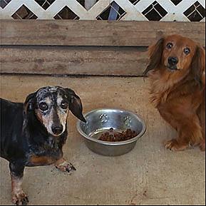 Courtesy of Pet Savers Shreveport