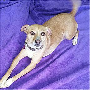 Pet Savers Shreveport