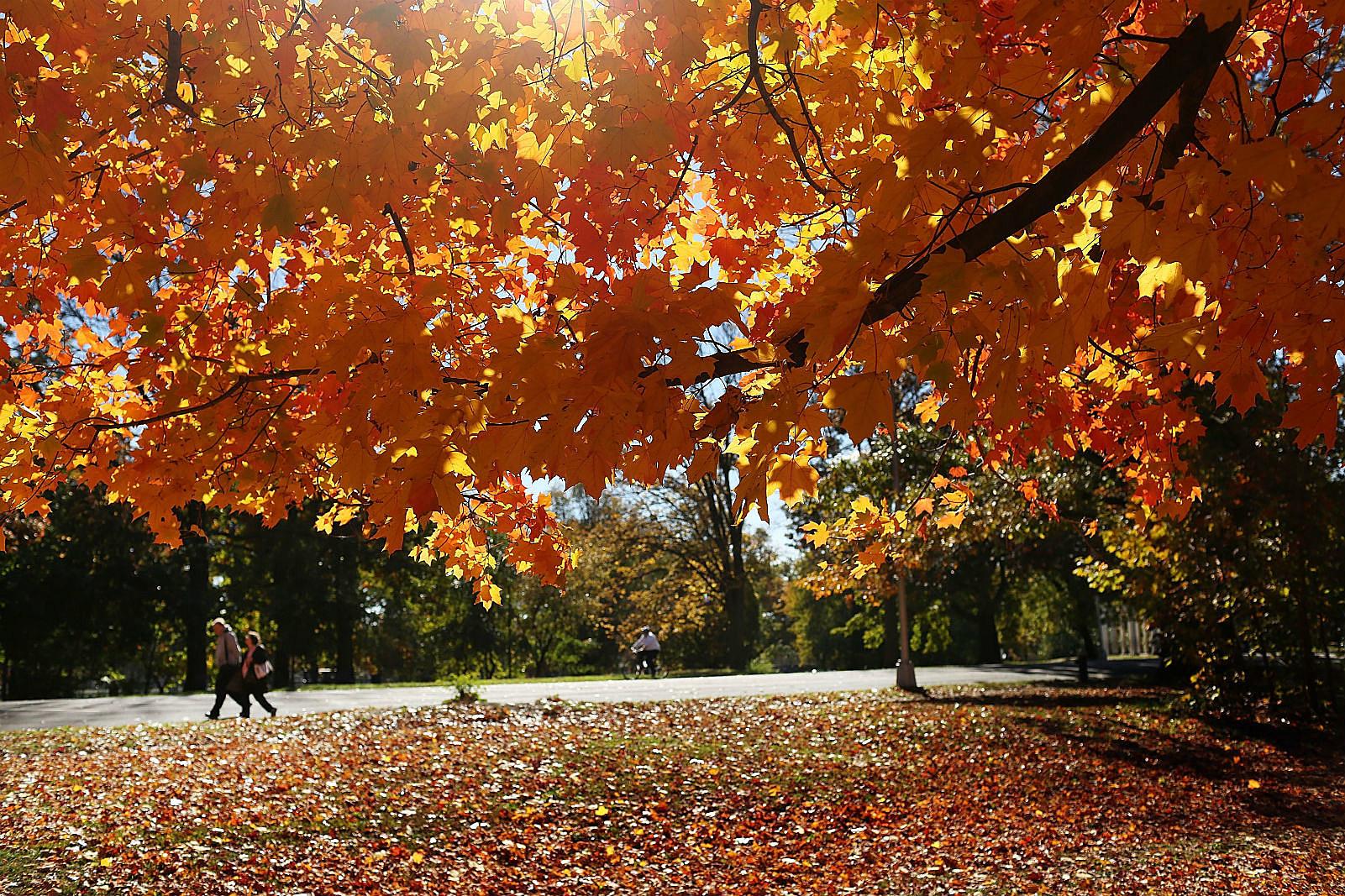 Fall date